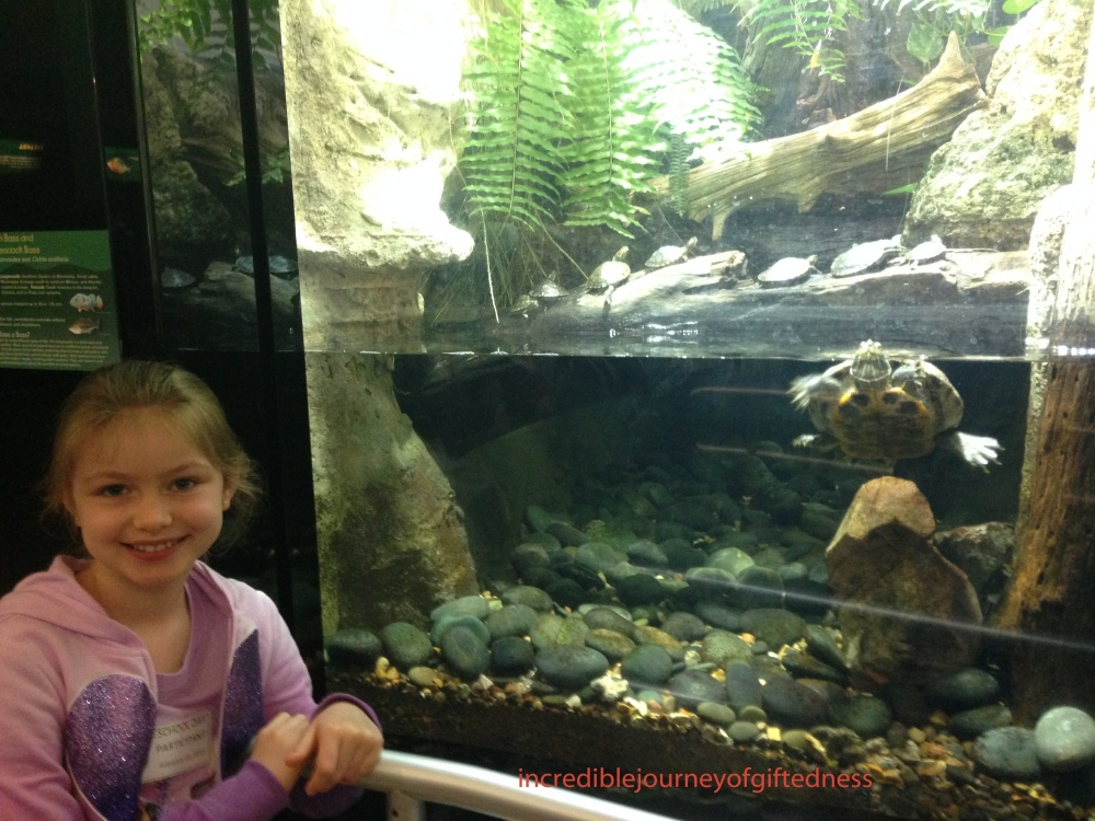 Pictures 231